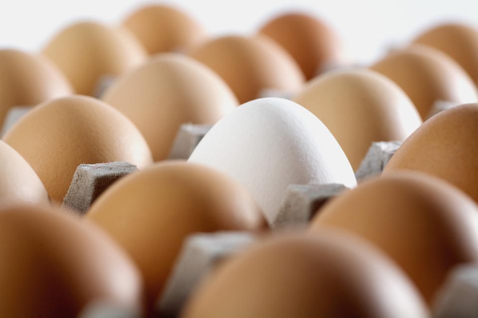 רישוי מחסן ביצים